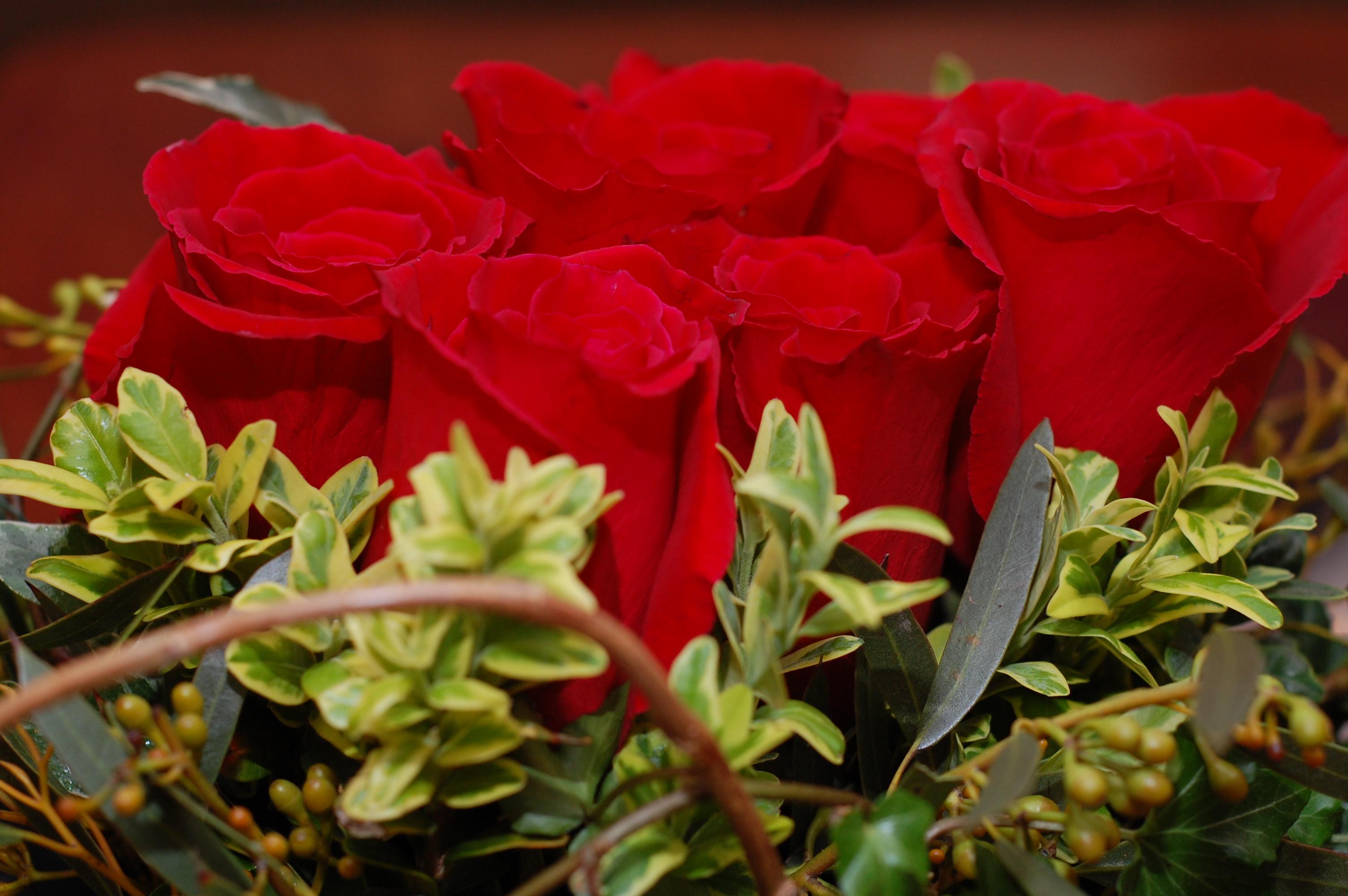 Roses: anniversary flowers